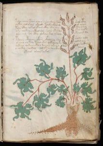code de Voynich