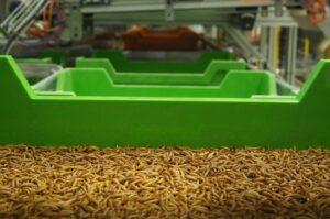 larves d'insectes  comestibles